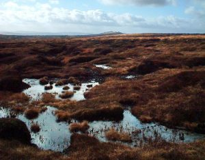 Peat lands need protection